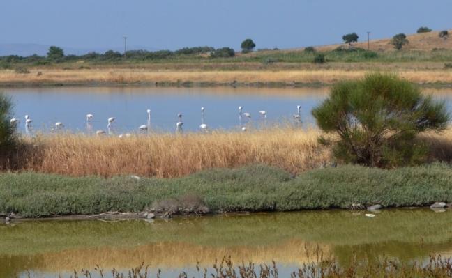 Kalloni Salt Pans; Flamingos; Lesvos