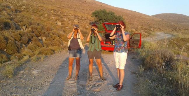 lesvos birds; birding; birdwatching