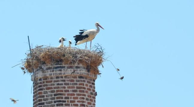 White Stork nest; Lesvos birds; Lesvos birding